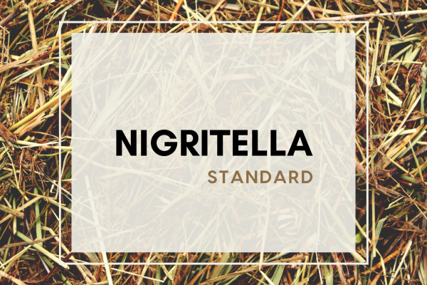 Nigritella (5 guests)