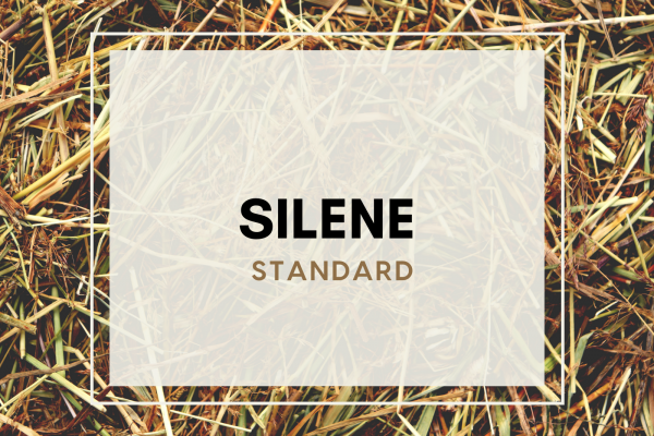 Silene (2 guests)